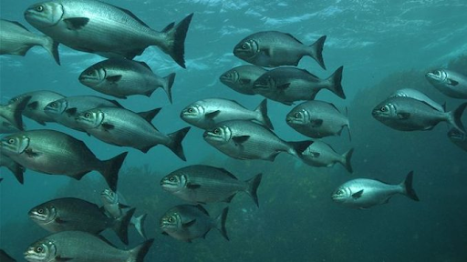 Predict fish migration - Blog S-PRO